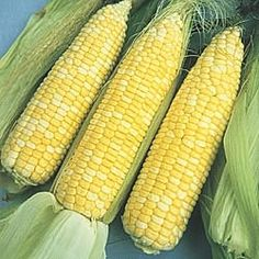 THAT is what sweet corn should look like, people. Not all yellow and starchy! We'd make whole meals of just corn and tomatoes in the summer in Illinois.