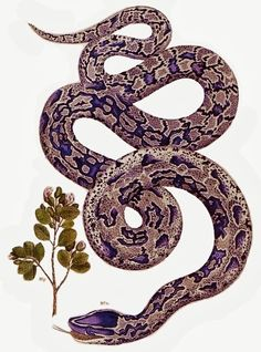 anaconda drawing in style of plant drawings