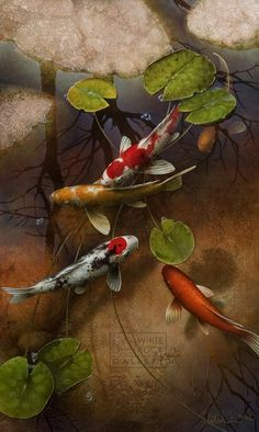 "Koi fish are the domesticated variety of common carp. Actually, the word ""koi"" comes from the Japanese word that means ""carp"". Outdoor koi ponds are relaxing. Koi Fish Pond, Fish Ponds, Koi Art, Fish Art, Koi Painting, Fish Paintings, Flora Und Fauna, Art Asiatique, Japanese Koi"