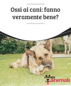 Ossi ai cani: fanno veramente bene?  #Nell'immaginario collettivo quando si #pensa al #cane, lo si mette in #relazione agli #ossi.  #ALIMENTAZIONE