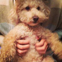 doggy like teddy