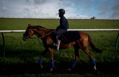 Animal Kingdom: For a Horse of the World, a Finale in a Regal Race