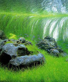 Takashi Amano - aquarium design
