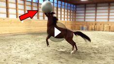 Wenn man an Bälle und Tiere denkt, fallen einem als erstes Hunde ein. Aber auch Pferde können mit Bällen ihren Spaß haben, wie dieser Zusammenschnitt...