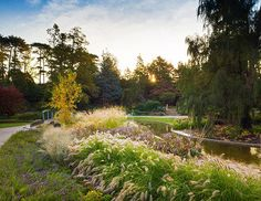 The signature garden of the Royal Botanical Gardens (RBG) located in Burlington, Ontario, Canada, is the David Braley and Nancy   Read More
