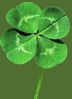 Spent many childhood hours looking for a lucky four leaf clover. Yep me & my cousins too, hours in the shade sitting in the grass, looking & looking, then my aunt Ursa would casually walk up to us, bend down & pick one! This happened all the time!