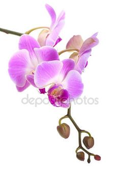 Download - Orchid on a white background — Stock Image #7540174