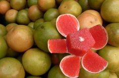 Arbolitos de #toronja rosada - Citrus X paradissi citricos