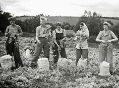 Vintage Photos of Land Girls During World War II Working People, Working Woman, Working Girls, Old Photos, Vintage Photos, Antique Photos, Land Girls, Army Girls, Dig For Victory