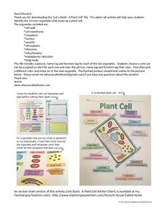 Lets Build: A Plant Cell - Students build their own plant cell while learning about the organelles and their functions! FREE