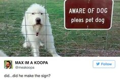 The 50 Funniest Tweets About Dogs In 2016