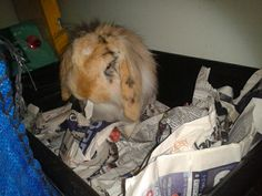 Just chillin' in the recycling bin!!