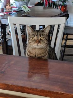Timber loves sitting at the bar just like his humans by chellolizette cats kitten catsonweb cute adorable funny sleepy animals nature kitty cutie ca