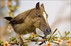 Horsebird - Imgur