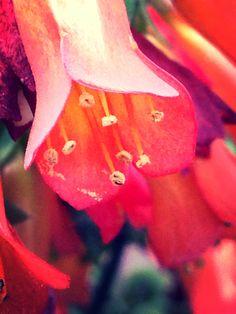 Pollen Buds✨