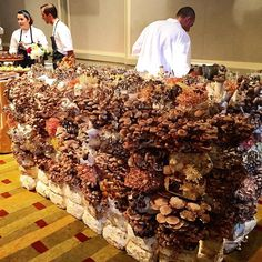 """greenwithtiffany: """" Is this amazing or what? A mushroom table built from 7 types of mushrooms. Chef John Cox of the Post Ranch Inn was making mushroom ceviche. Grow Your Own Mushrooms, Growing Mushrooms At Home, Garden Mushrooms, Edible Mushrooms, Wild Mushrooms, Stuffed Mushrooms, Mushroom Spores, Mushroom Cultivation, Fruit Garden"""