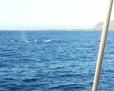 Whale photo from Kauai Sea Tours