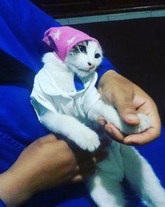 Leo kaysb7 3likom o ty9olikom sbah lkhiiir #cat #crasycat #moche  #moroccanblogger