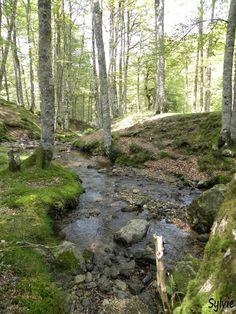 Forêt d'Iraty / Pays Basque / Pyrénées