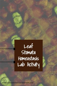 This DIFFERENTIATED lab activity is a great chance for students to make a slide, practice microscope skills, and learn and reinforce other science content such as leaf structure, stomata, and homeostasis. Included are two versions of a leaf structure lab. Science Curriculum, Science Resources, Science Lessons, Secondary School Science, Middle School Science, Biology Classroom, Teaching Biology, Ap Environmental Science, Leaf Structure