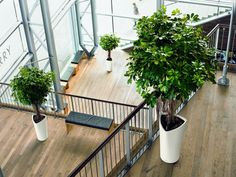 Choosing the Best Indoor Plants for Your Home or Office | Interior Gardens