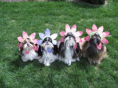 Shih Tzu Dog Costume Photos including Merry Christmas Cards