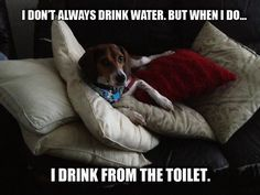 Stay... you know....  #beagle #beagles #dogs lifewithbeagle.com