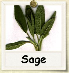 Guide to Growing Sage Healing Herbs, Medicinal Herbs, Fruit Garden, Edible Garden, World 7, Wild Edibles, Love Garden, Natural Cures, Natural Foods