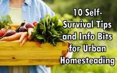 You don't have to live in a rural area to enjoy the fruits of your own labor. Many people in the suburbs and cities are learning how to homestead (live a lifestyle of self-sufficiency) without ever leaving their cities.