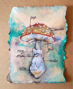 Original Mushroom Illustration in frame 4x6 inches by Amanda Christine Shelton
