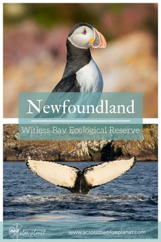 Exploring Witless Bay Ecological Reserve in Newfoundland, Canada. Be kind to the places you visit. Newfoundland Canada, Newfoundland And Labrador, Canada Travel, Travel Usa, Travel Europe, Travel Packing, Travel Backpack, The Blue Planet, Africa Travel