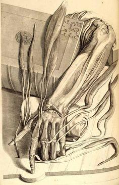 Morbid Anatomy: Anatomical Maps, A Visual History