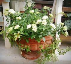 Plant Cuttings, Container Flowers, Window Boxes, Cut Flowers, Container Gardening, Flower Pots, Green, Plants, Flower Vases