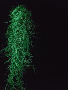 flAVATAR Tillandsia glow in the dark in green