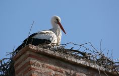 Olmedo (Valladolid) Storks, Bald Eagle, Creatures, Holidays, Bird, People, Animals, Holidays Events, Animales