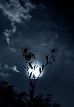 nature, the moon, once in a blue moon ♥ Nature Landscape, Midnight Garden, Midnight Blue, Moon Pictures, Moon Photography, Beautiful Moon, Foto Art, Blue Moon, Dark Moon