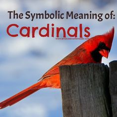 Experiencing visits by deceased loved ones? Your loved ones on the Other  Side can send you signs that they are visiting you. Common signs from  spirits are birds and insects. Check out this article to find out why!
