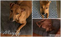 Murphy <3 Pet Adoption, Pets, Animals, Animales, Animaux, Animal, Animais, Animals And Pets