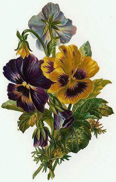 bouquet of pansies...Victorian die cut...