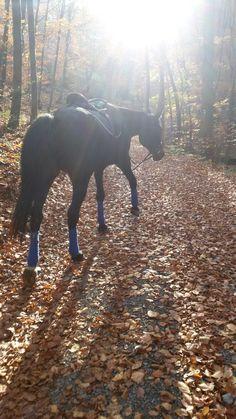 #autumn#horse#blue#sun