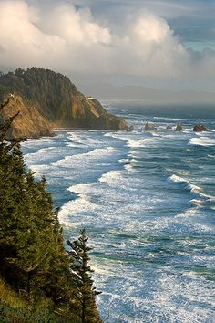 Cape Meares OR: be sure to take the short hike behind the parking lot to see the Octopus Tree.