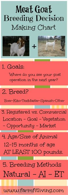 Are you stuck trying to figure out where to go next with your meat goat operation? Here's some answers to make meat goat breeding decisions easier. Cabras Boer, Types Of Cows, Goat Pen, Miniature Cattle, Longhorn Cow, Mini Cows, Goat Care, Boer Goats