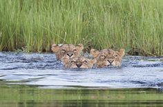 Safarious - Duba Plains January 2013 / Matthew Copham / Gallery