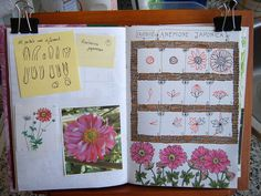 #09 Ana Navas, Anemone, and Japonica tangle patterns