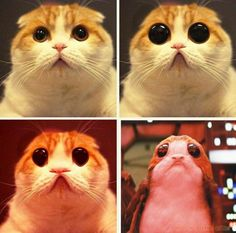 Waffles the cat morphs into Porg.