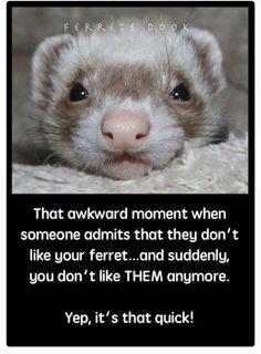 Gotta love ferrets!!!
