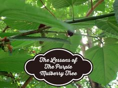 The Lessons of The Purple Mulberry Tree #Encouragement, #Inspiration #SimpleandFrugalLiving