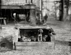 """February 1923. Washington, D.C., or vicinity. """"Puppies."""" Probably poky. Lovably little. Harris & Ewing Collection glass negative."""