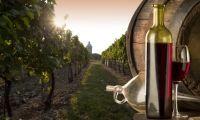www.vinoway.com | la zona maggiormente vocata al vino, anche per storia, cultura sono i Castelli Romani, a due passi da Roma. Subito dopo c'è la zona della Tuscia affiancati dai famosi colli della Sabina. Per finire nella zona di Frosinone col suo conosciuto e rinomato Cesanese e la zona di Latina. | foto:Le strade del vino nel Lazio | @davidecaluppi #strade #vino #lazio #vinoway #acinus