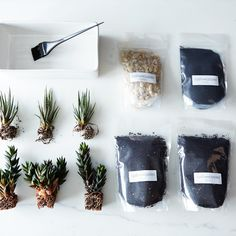 DIY Cactus Garden Planter on Provisions by Food52